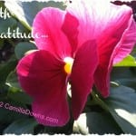 Thank You Pink Flower August 2012