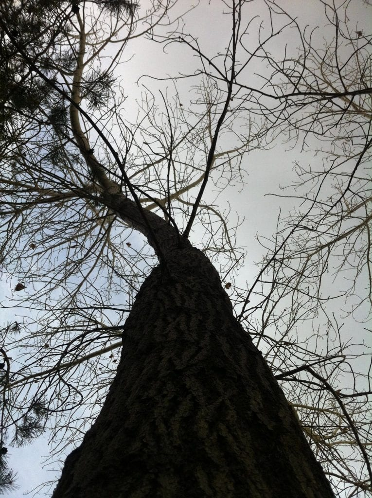 Looking Up Tree 2016